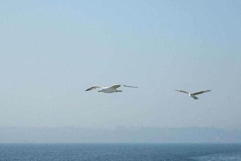Martı Martılar Möwe Möwen Gull Gulls Möwe Im Flug Gulls In Flight Deniz Gokyuzu Meer Himmel Sea Sky Gulls And Sea Sea And Sky