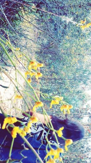 Flowers,Plants & Garden Jungle Yellow Color Yellow Flowers Friends Day Colombia Nature Pacific First Eyeem Photo Nature's Diversities Colombia ♥  Humaneye Moment Moments Of My Life @ 私の人生の瞬間。