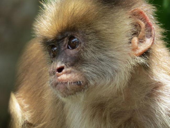 Amazon Amazon Monkey Amazon River Amazonas Animal Themes Close-up Monkey Nature At Its Best Nature Up Close One Animal Travel The World