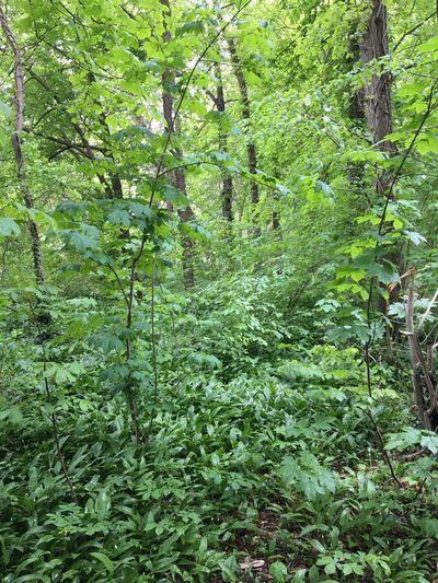 Grün Blätter im