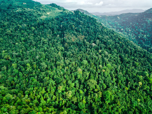 DJI X Eyeem Drone  Beauty In Nature Day Dronephotography Forest Freshness Green Color Growth Landscape Lush Foliage Mountain Nature No People Outdoors Scenics Sky Skypixel Tea Crop Tranquility Tree