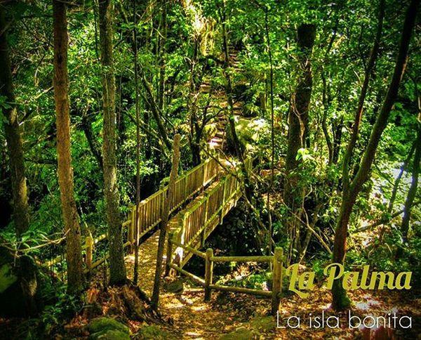La isla bonita LaPalma Canaryislands Diversity Rough Beautiful High Surprising Marvellous Prettyisland Forest Island Staringatspain SPAIN Laislabonita Tenerife Green Bridge Forest España Canarias