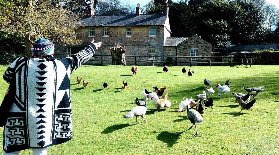 Hungry birds Brownseaisland Mymommamyprideandjoy HuaweiP9 Love ♥