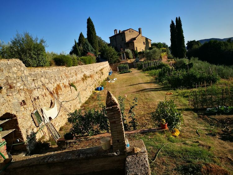 An Ancient Vegetable garden in my Tuscany💞😍🍆🍆🍆🍇🍇🍇🍇🍈🍈🍈🍉🍉🍉🍋🍋🍋🍅🍅🍅🍅🍠🍠🍠🍠🍓🍓🍓🍒🍒🍒🍑🍐🍐🍐🍁🍁🍁🍀🍀🍀🌲🌲🌲🌲 Nature Beautiful Colors Nature Beautiful Nature Spectacular Beautiful Day Vegetablegarden Vegetable Plant Vegetables, Vegetable Garden Vegetable Gardening Vegetables & Fruits