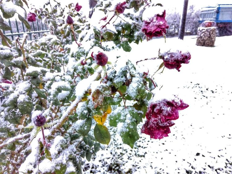 Nature Growth Flower Snow Beauty In Nature Winter Cold Temperature No People Outdoors Day Nature Mobile Photography Greece Landscape_photography Corinth Greece