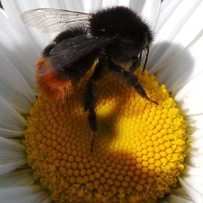 It's much easier when they sit still! Bee Stockport Igersmcr