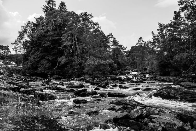 Lomography Neptune Convertible Art Lens System Black And White Blackandwhite Tree Plant Nature Sky Beauty In Nature No People Rock Day Scenics - Nature Tranquility Water Growth Rock - Object Land Forest Solid Non-urban Scene Outdoors Tranquil Scene Flowing Water Flowing