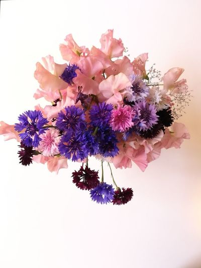Cornflower Sweatpea Bouquet Flower Head Flower White Background Pink Color Purple Blossom Petal Close-up Lilac In Bloom Bunch Of Flowers Blooming