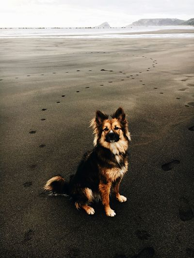 Portrait of dog sitting on sand at beach