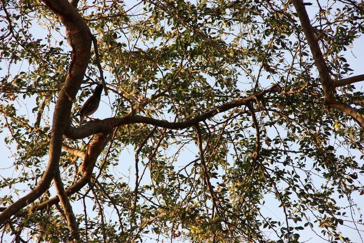 Branch Day