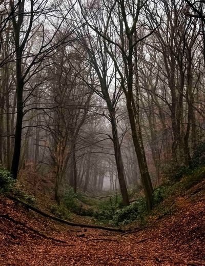 Louisedal Nijmegen Gelderland,remains of Roman acquaduct Archeology Archeological Site Roman Ruins Eary Morning Painterly Tree Forest Nature Tranquility Fog Change Beauty In Nature Scenics No People Branch The Way Forward Outdoors Tranquil Scene Landscape Leaf Bare Tree Day Winter