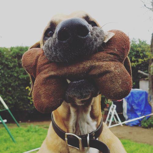 Dog Pets One Animal Domestic Animals Outdoors EyeEm Gallery Taking Photos Great Dane