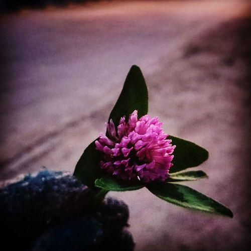 🌞🌞🌞 Flower 🌸 Beautiful Amazing Prawie Nie Przerobilem VSCO Vscopoland Vscocam Vscocamphotos Instalike Instagram Hello World Im Photographer Photobomber Like IT Insta Instagood Goorovskyphotography So Tired Keep  calm hashtag nature pink beauty