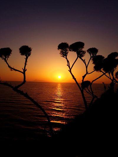 Sunset Sky Water Beauty In Nature Scenics - Nature Tree Silhouette Sea Plant Orange Color Sun Nature No People Horizon Over Water Outdoors Horizon Beach First Eyeem Photo