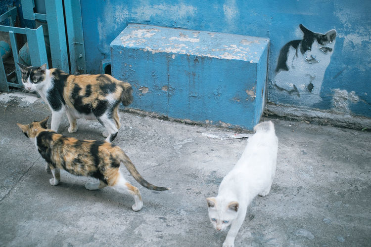 Animal Themes Cat Eyeem Philippines No Human Elements No People Street Streetphotography Art Is Everywhere