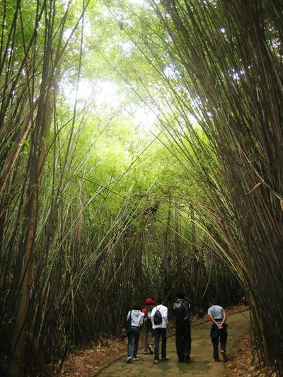 Real People Tree Nature Men Growth Beauty In Nature Lifestyles Green Color Full Length Outdoors People Day Togetherness Bamboo Grove Brazil Brasil São Paulo, Brasil São Paulo Botanical Garden Jardim Botanico Nature Photography Naturelovers Bamboo Trees Finding New Frontiers EyeEmNewHere