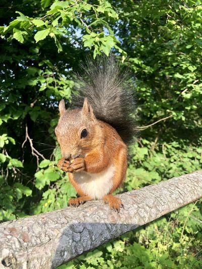 Nuts! Animal