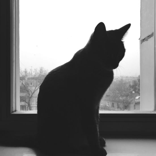 Window Domestic Cat Pets One Animal Domestic Animals Window Sill Animal Themes Looking Through Window Home Interior EyeEm Selects EyeEmNewHere The Week On EyeEm EyeEmNewHere
