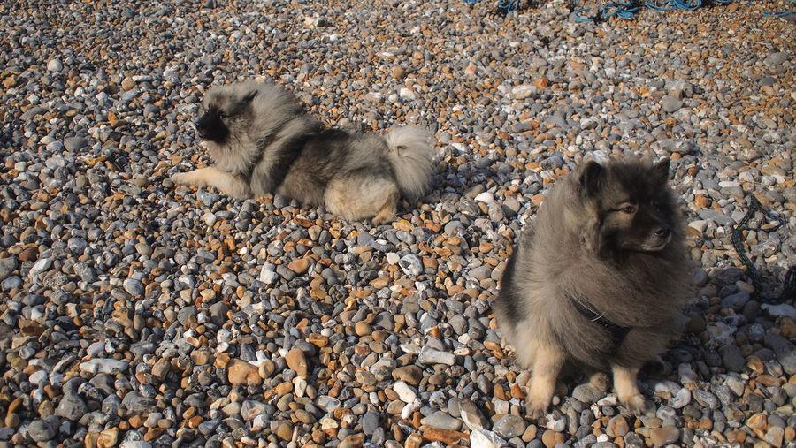 Pets Wind Breeze Pebble Beach Dogs Animal Pairs Animal Twins Same  Bird Beach Sunlight Pebble