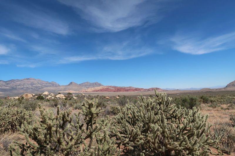 Plants growing in desert against blue sky
