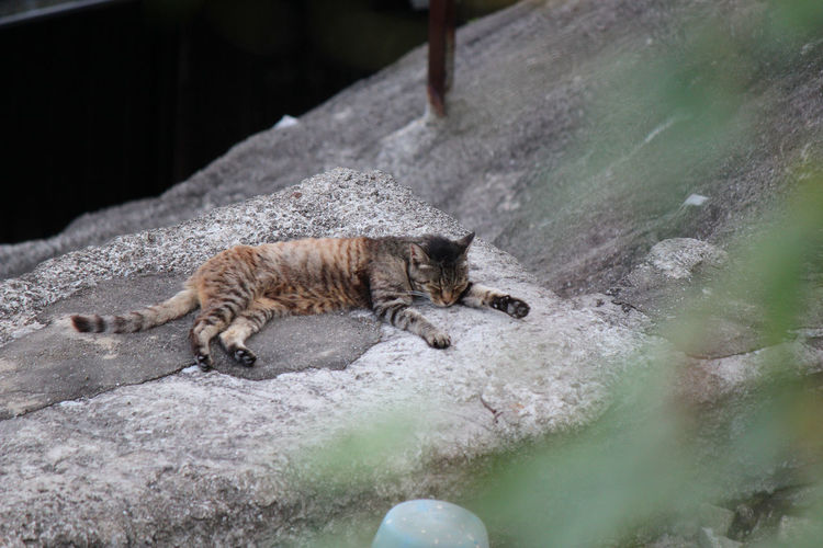 High Angle View Of Cat Sleeping On Rock