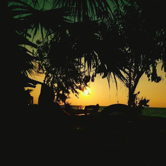 Taking Photos Hello World Relaxing Enjoying Life Nature Photography Naturelovers Adventure Club Abana Kastamonu Treescape Seaside Enjoying The Sun Sea Sunshine Sunset Clouds And Sky Sea And Sky Sunsetlover Reflection