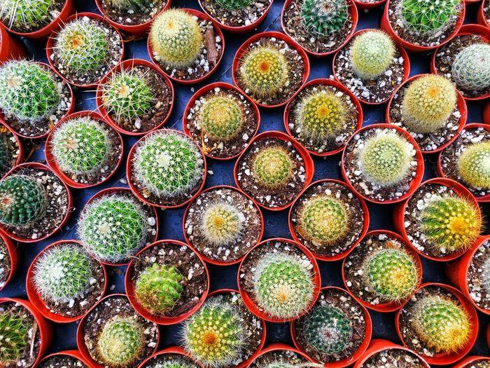 Full frame shot of cactus