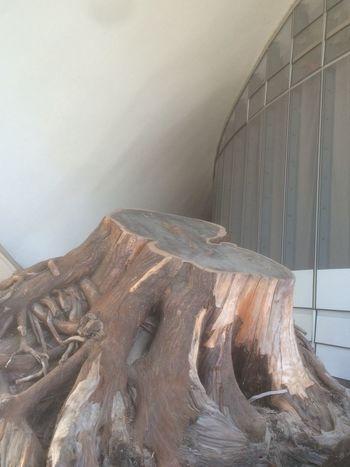 Bigtree Baumkuchen