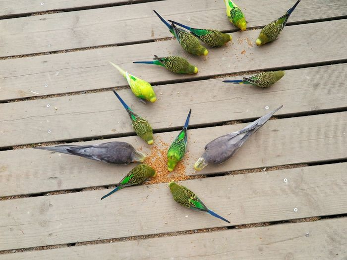 High Angle View Of Parrots Eating