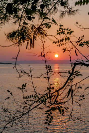 Sunset Sky Beauty In Nature Water Scenics - Nature Tranquility Plant Tranquil Scene Silhouette Tree Sun Sea Orange Color Nature Idyllic No People Horizon Over Water Beach Land Outdoors Romantic Sky