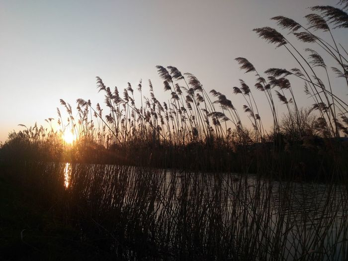 Run and sunset Sunset_collection Sunset Landscape_photography Nature Photography Water Grass Wind Metz, France