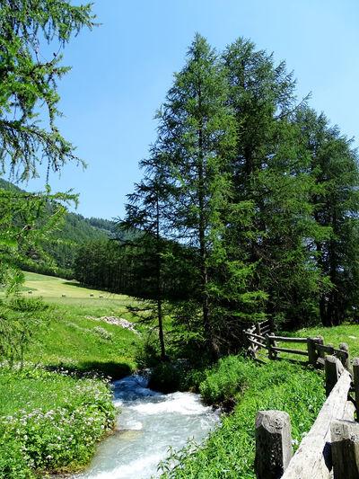 Landscape Alps