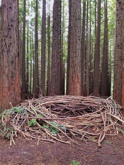 Nest Redwood