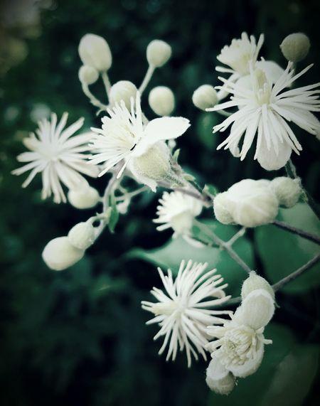 Flower, Nature & Beauty