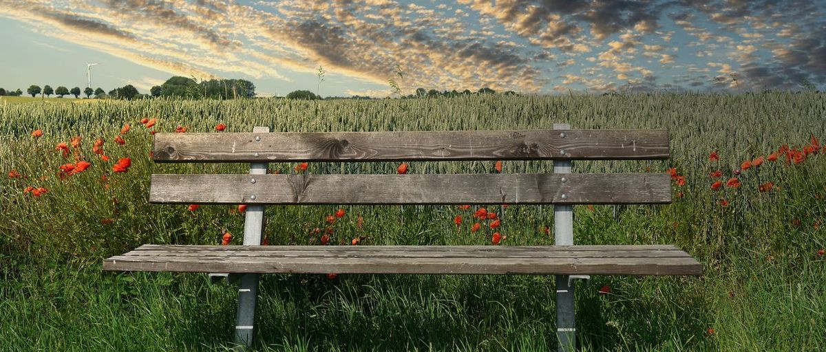 View of bench in field