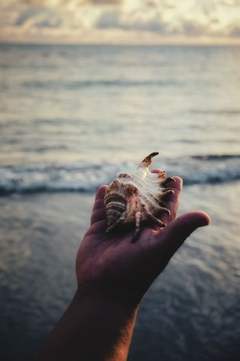 Cropped Image Of Hand Holding Seashell At Beach