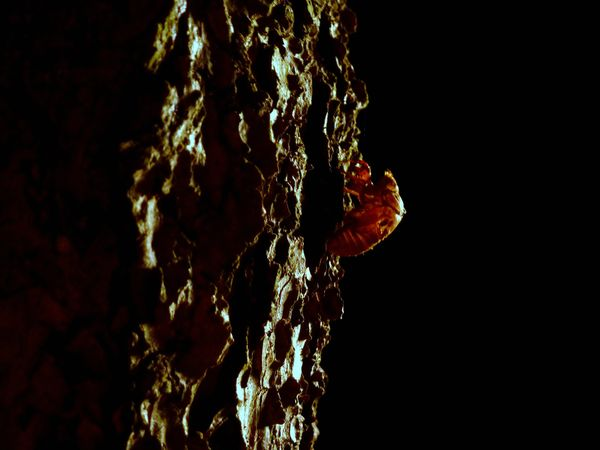 Beauty In Nature Black Background Close-up Insect Natural Pattern Nature Night Textured  Tree Trunk Welcome To Black