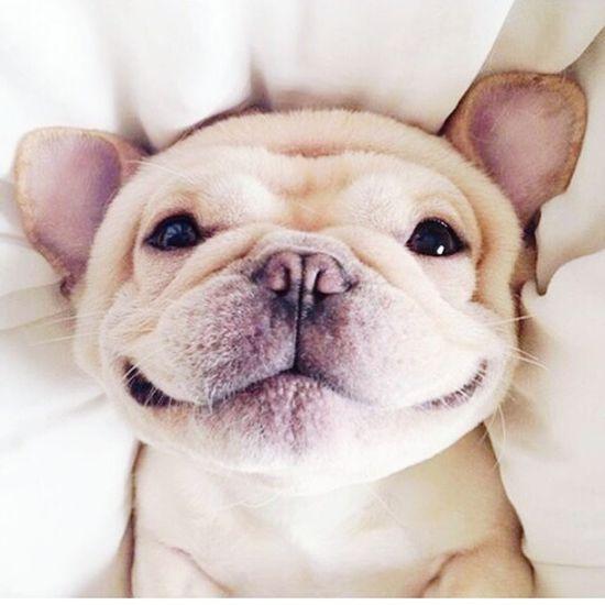 Hi! Sweet Smile ✌ Cheese! Dog❤