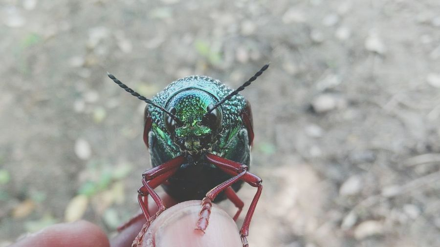 Cropped Hand Of Person Holding Green Beetle