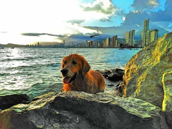 Cloud - Sky Domestic Animals Outdoors Animal Themes Pets One Animal No People Water Sea Dog Day Mammal Beach Sky Urban Skyline Nature Tranquility Landscape Paradise Golden Retriever Dog❤ Dogfriend Beauty In Nature Dogrelaxing Nature