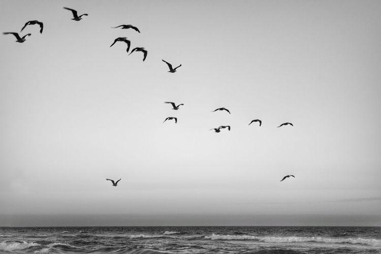 fly away Bird