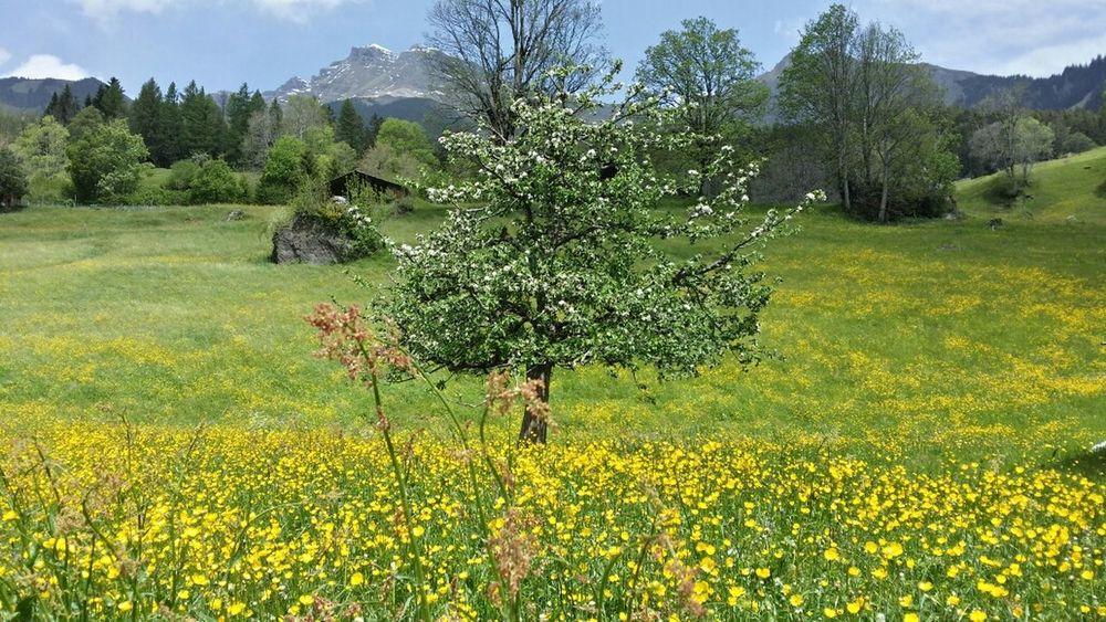 Taking Photos Streetphoto_bw EyeEm Nature Lover Grindelwald