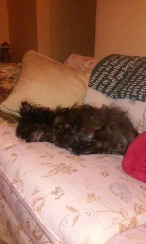 Buddy Dog sleeping Enjoying Life