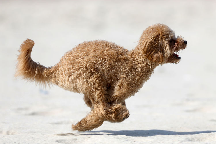 Side view of a dog on land