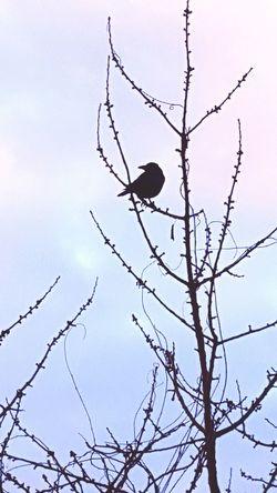 Bird Black Bird Tree Bird On A Tree Pause Early Bird Looking For Flying Beak Feather  Feathers Nature Animal