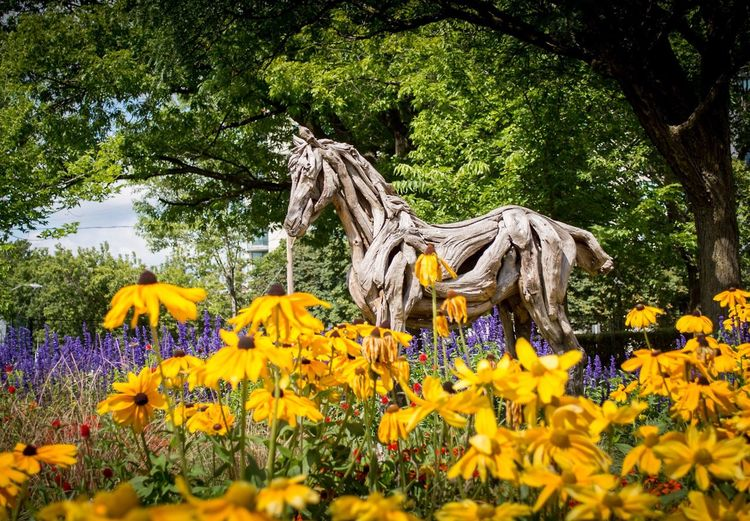 Flower Growth Nature Tree Yellow Beauty In Nature No People Statue Plant Outdoors Day Fragility Sculpture Flowerbed Animal Themes Flower Head Freshness Mammal Canada Ottawa Parc Jacques Cartier Horse