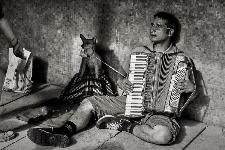 Homeless Adult ALMS Beggar Concertina Esperança Melodia Melody Music Musica Musical Instrument Musico One Man Only One Person Pedinte Sem Abrigo Teclas