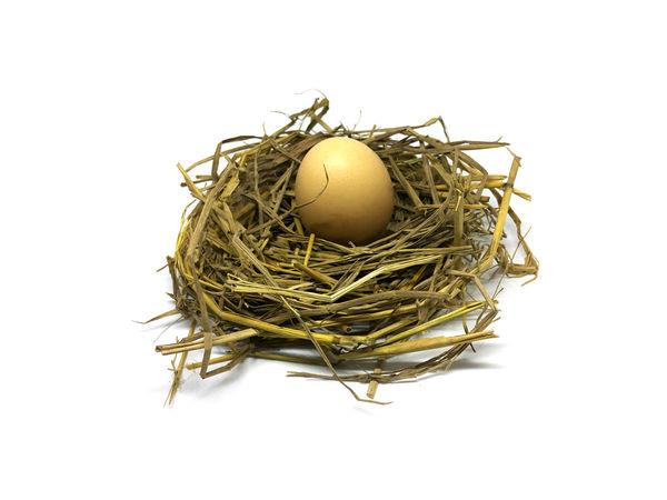 Ovary Animal Egg Animal Nest Bird Nest Bird's Nest Egg Fragility Straw Studio Shot White Background