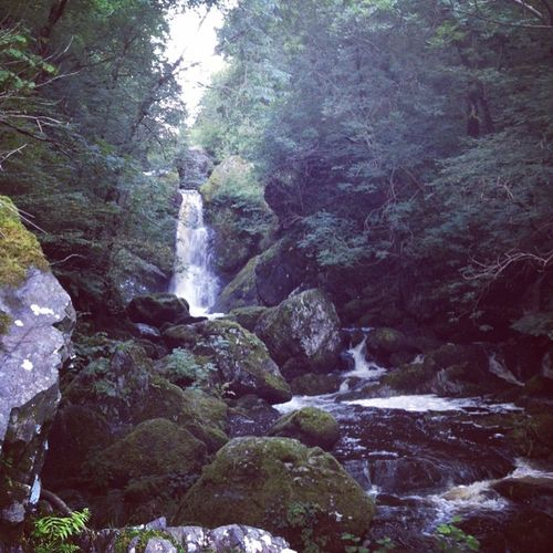 Beauty In Nature Devil's Glen Flowing Water Forest Ireland Non-urban Scene Park Rock - Object Scenics Tranquility Water Waterfall