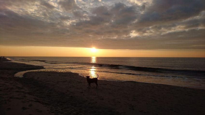 Dog on a beach in the sunset. Sunset Beach Sea Dramatic Sky Holland Beach Life Beach Photography Shore Noordwijk Aan Zee Noordzee Zuid-Hollands Landschap Nederland Noordwijk Nederlandse Natuur